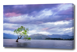 Wanaka Tree Sunset