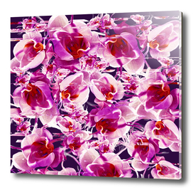 Orchid Chaos