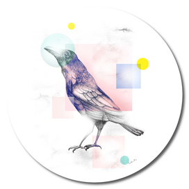 Mystical Woodland Animals: The Raven