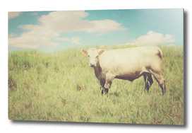 Vintage Summer Cow