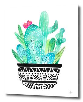Pot Me A Cacti!