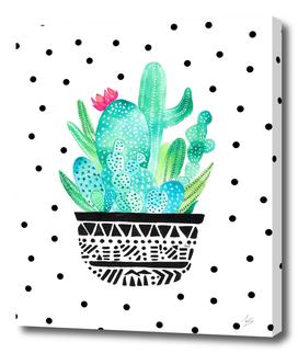 Pot Me A Cacti! Dots
