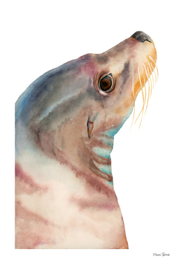 Lazy Glance - Sea Lion Watercolor Painting