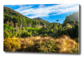 Forest and mountain range at Wilson Bay, NZ