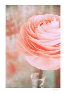 rosa monday