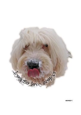 LeoSimo Love Project