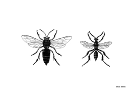Insectes 02