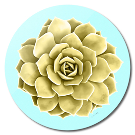 Yellow Succulent Plant on Teal Wall
