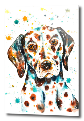 Liver-spotted Dalmatian