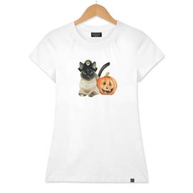 Halloween Siamese Cat with Jack O' Lantern
