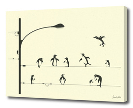 PENGUINS ON A WIRE