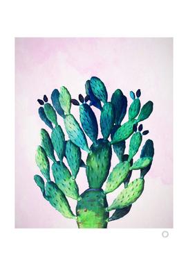 Cactus Three Ways