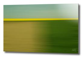 Canola fields Movement