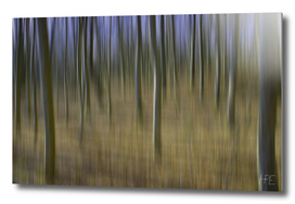 Forest in motion