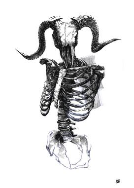 Skeleton v.01