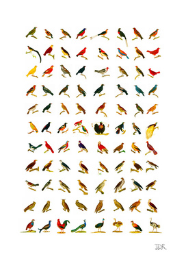 88 of Georges-Louis Leclercs' Birds