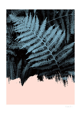 Blush on Ferns