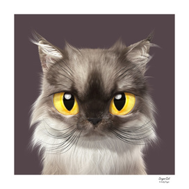 Mink the Persian cat