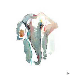 ELEPHANT III - Freefall Series