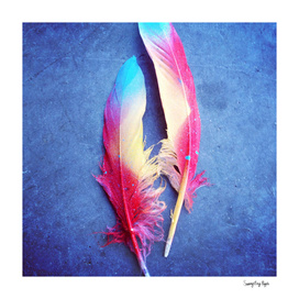 Feather of Colors