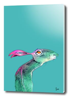 Harriet | Color A Series