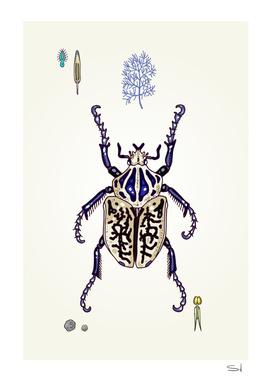 Happy Goliath beetle