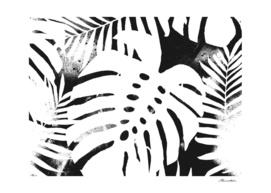 Monstera Black and white