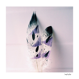 Spring Lavender Feathers
