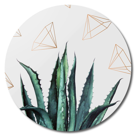 Agave Geometry