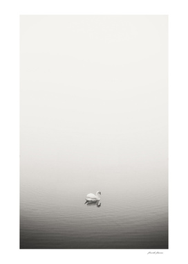 Lonely Swan