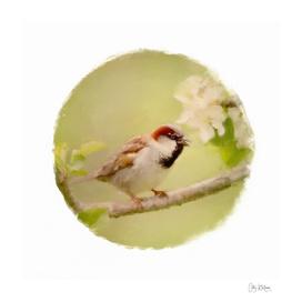 sparrow 11