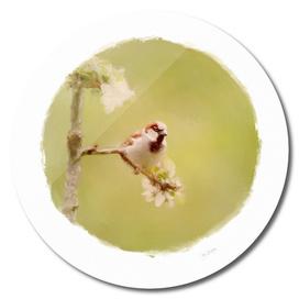 sparrow 12