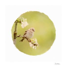 sparrow 13