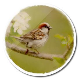 sparrow 15