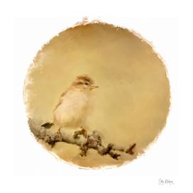 sparrow 19