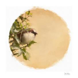 sparrow 20