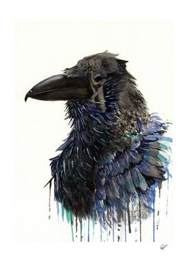 Eyes of Huginn - Raven Watercolor