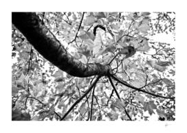 Controlled chaos - From the Nature as Abstract Series