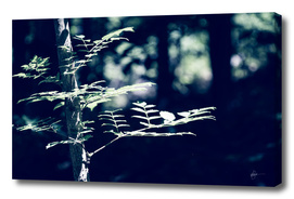 Palisades Green - From the Nature as Abstract Series