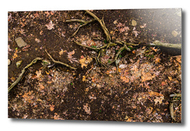 Roots of life - From the Nature as Abstract Series