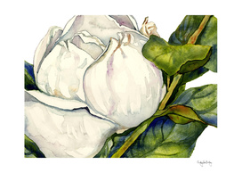 Magnolia with Leaves