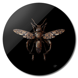 Engraved Entomology C