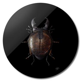 Engraved Entomology B