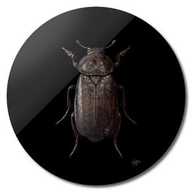 Engraved Entomology D