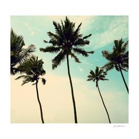 palm_trees