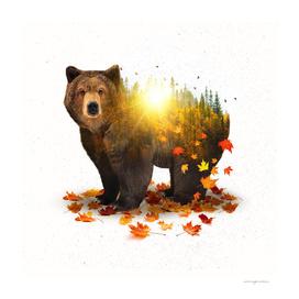 Equinox | Bear