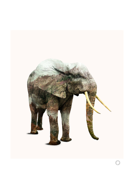elephant-transformation