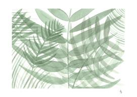Transparency Foliage
