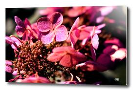 Purple State of Mind