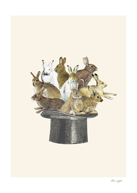 Rabbits in a hat